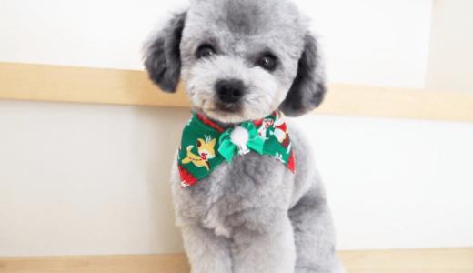愛犬の可愛い写真撮影前に気をつけたい5つの注意点とおさえておきたい撮り方のポイント8つ