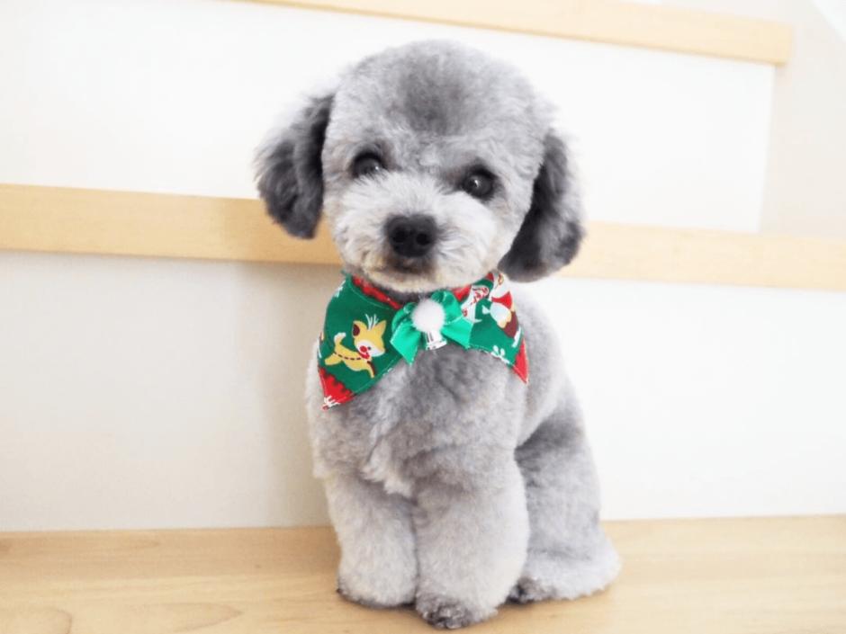 愛犬の写真の撮り方と撮影のポイント