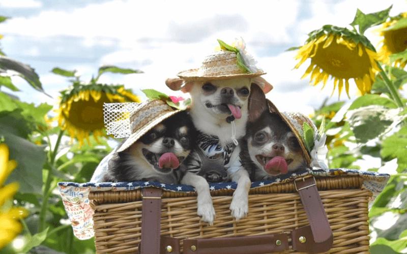 犬に帽子ってどんな効果があるの?おすすめ帽子5選