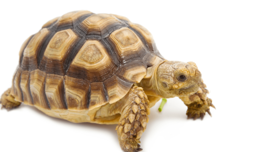 亀の飼い方と飼育のポイント!おすすめ必要アイテム11選を紹介