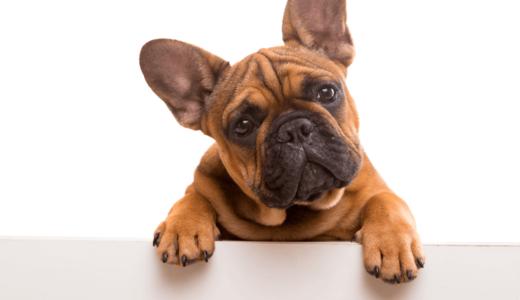 話題のアーテミス アガリクス?その評判や口コミ・涙やけに対する効果についても解説
