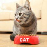 子猫 離乳食