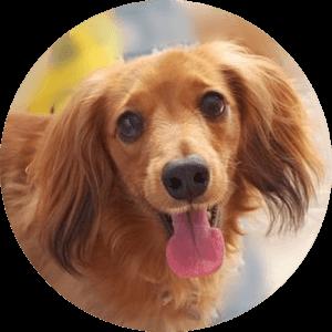 lani(ラニ) [dogs.locolani]