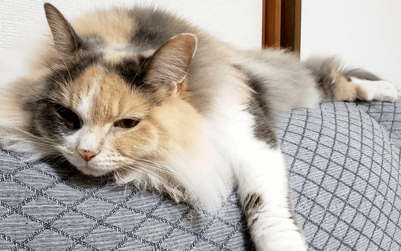 飼い猫の運動量は多い?少ない?猫に必要な運動量と運動不足解消方法