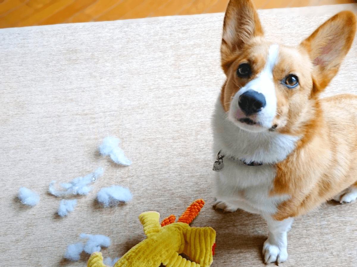 愛犬の留守番を安心・安全に!おすすめグッズとカメラアプリをご紹介!