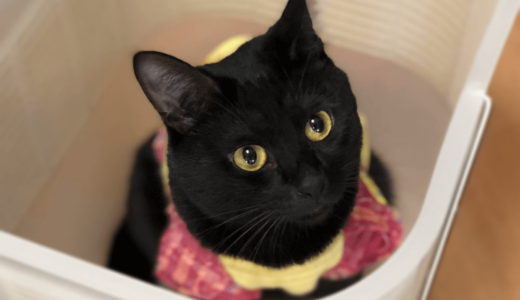 黒猫の種類おすすめ16選!それぞれの名前と気になる性格の特徴とは