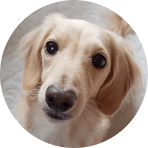 loco(ロコ) [dogs.locolani]