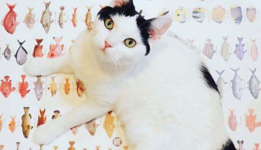 猫といえば魚!だけど本当は肉食って知ってた?