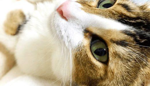 猫のひげは幸運のご利益を運ぶ役割がある?切ることで起こる身体への影響や生え変わる時期とは