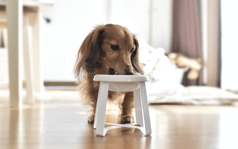 フードボウル 犬