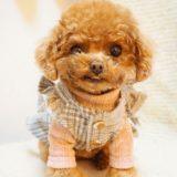 愛犬に洋服を着せるメリットや注意点は?