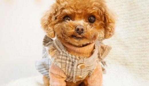 犬に洋服を着せるメリットや選び方!注意点を理解して愛犬にぴったりの服を選ぼう