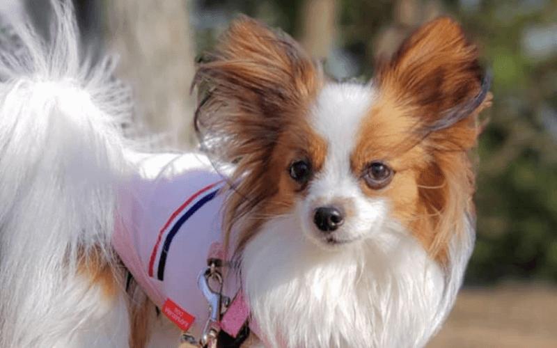 長生きする犬はどんな特徴がある?長生き傾向にある犬種や長寿の秘訣を紹介