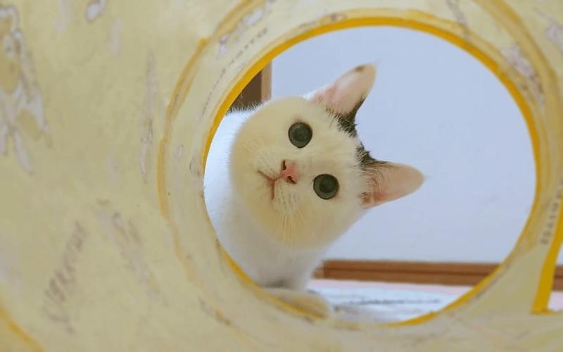ねこ トンネル