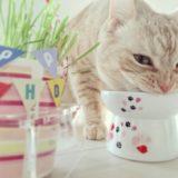 猫 フードボウル