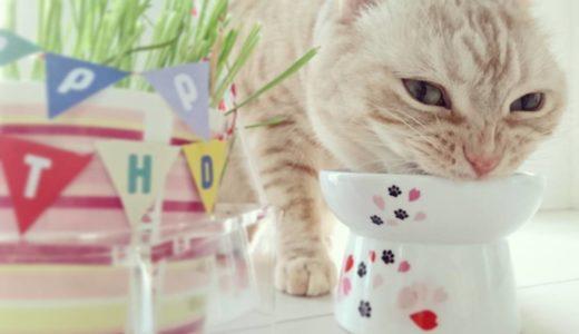猫のフードボウルを選ぶポイントとおすすめの猫食器17選