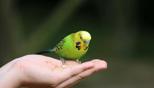 鳥類の飼い方って?特徴・注意点や必要アイテム12選を知れば初心者でも問題なし!